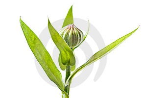 Plant Isolated Stock Image - Image: 8651941