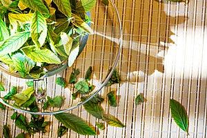 свежесть Стоковая Фотография RF - изображение: 8652157