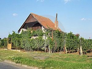 Casa Perto Do Vinhedo Foto de Stock Royalty Free - Imagem: 8652815