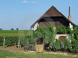 House Near Vineyard Royalty Free Stock Photos - Image: 8652818