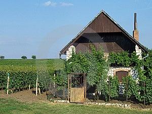 House Near Vineyard Royalty Free Stock Photos - Image: 8652818
