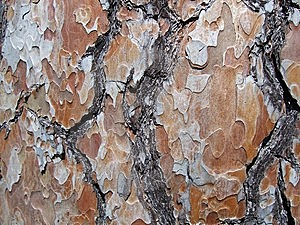Crust On Timber Royalty Free Stock Images - Image: 8652839