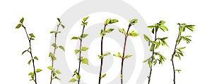 Planta Aislada Foto de archivo - Imagen: 8653280