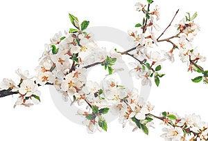 Beautiful Flower On White Royalty Free Stock Photos - Image: 8653408