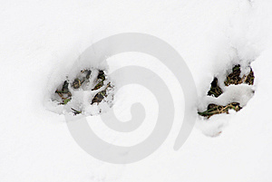 Footsteps In The Snow Royalty Free Stock Image - Image: 8653686