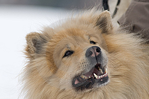 Cheeky Dog Stock Images - Image: 8653704