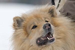 Zuchwały Pies Obrazy Stock - Obraz: 8653704