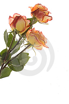 Bouquet Stock Images - Image: 8654514