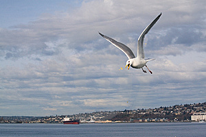 Seagull With Popcorn Stock Photography - Image: 8656592