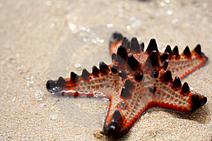 Starfish Island Stock Photos - Image: 8656833