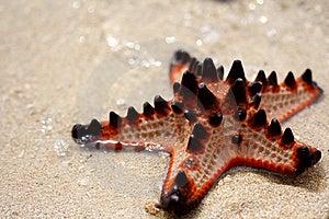 Isla De Las Estrellas De Mar Fotos de archivo - Imagen: 8656833