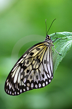 Butterfly Resting On A Leaf Stock Images - Image: 8656984