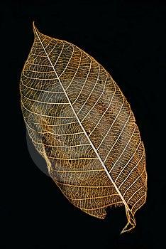Isolated Leaf Stock Photography - Image: 8657622