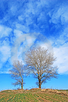 Couple Of Trees Royalty Free Stock Photography - Image: 8658347