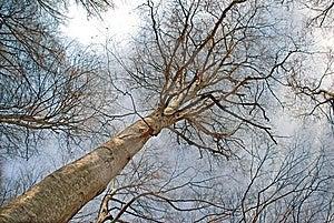Forêt Tôt De Ressort Images stock - Image: 8658504