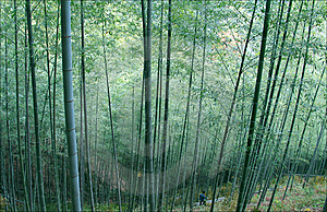 Bamboo Grove Stock Image - Image: 8658671