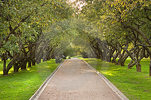 Park Rows 5 Stock Image - Image: 8660091