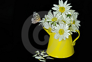 Delicious Daisy Royalty Free Stock Photography - Image: 8660977