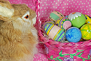 Easter Rabbit Royalty Free Stock Image - Image: 8661006