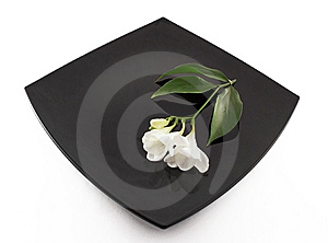The Flowerses On Guard;keep. Royalty Free Stock Image - Image: 8661406