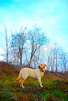 Labrador By The Lake Royalty Free Stock Photography - Image: 8661567