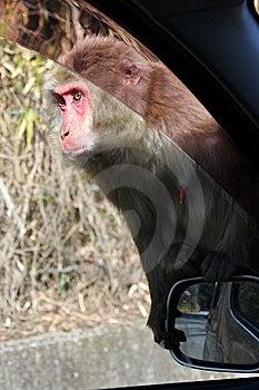 Monkey Royalty Free Stock Photography - Image: 8661617