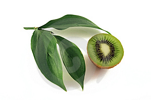 Kiwi Photos stock - Image: 8661643