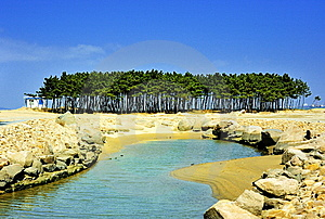 Pine Tree In Seashore Stock Images - Image: 8661674