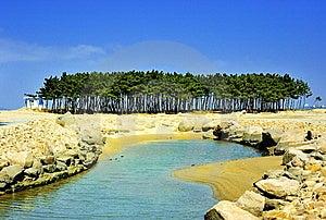 вал Seashore сосенки Стоковые Изображения - изображение: 8661674