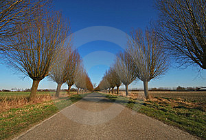 Willowroad Stock Image - Image: 8661791