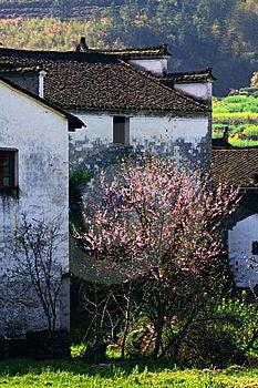 Frühling Lizenzfreies Stockbild - Bild: 8661806