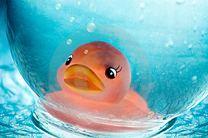Underwater Duck Royalty Free Stock Photo - Image: 8661915