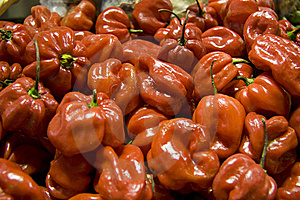 Red Pepper 1 Stock Image - Image: 8663271