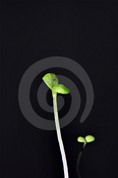 Seedling Stock Photos - Image: 8663473