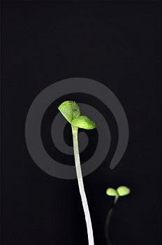 Seedling Stock Photos - Image: 8663473