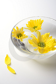 Yellow Flowers Royalty Free Stock Photo - Image: 8663575