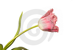 Flower Stock Photo - Image: 8664580