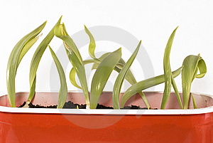 Plants Royalty Free Stock Images - Image: 8664679