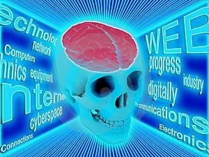 Menschliches Gehirn Stockbild - Bild: 8664971