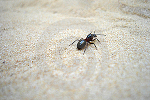 Ant Stock Images - Image: 8665454