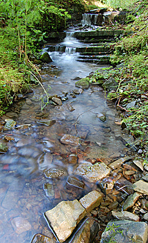 Forest Stream Stock Image - Image: 8665561