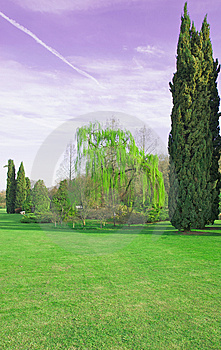 Weeping Willow Stock Image - Image: 8666211