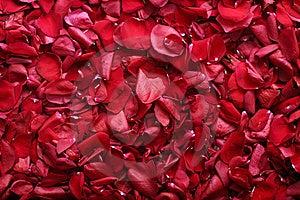 Rose-Blumenblätter Stockfotografie - Bild: 8667332