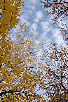 Sky And  Trees Royalty Free Stock Photo - Image: 8668935