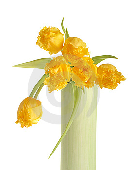 Yellow Tulips Stock Photo - Image: 8668960