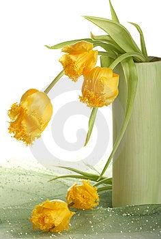Yellow Tulips Stock Image - Image: 8668961