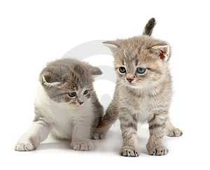 The Kittens Stock Photography - Image: 8668972