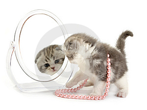 Kitten Looks In A Mirror Stock Images - Image: 8668974