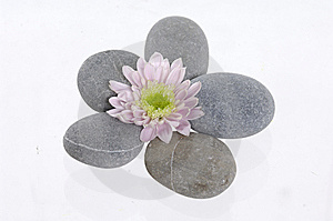 Spa Stones And Flower Stock Photo - Image: 8669040