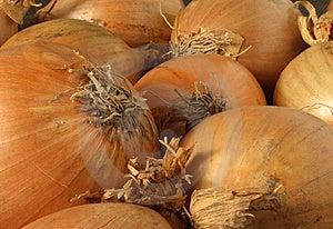 Onions Royalty Free Stock Photos - Image: 8669218